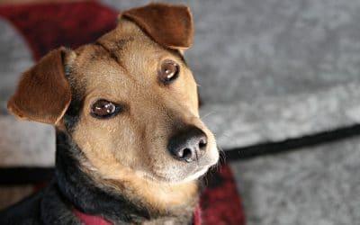 O que significa sonhar com fezes de cachorro