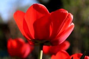 Qual o significado da cor vermelho