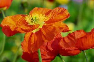 significado da cor laranja
