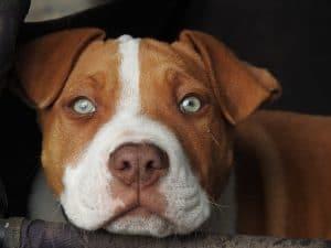 Qual o significado de um cachorro num sonho