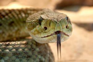 Qual o significado de cobra