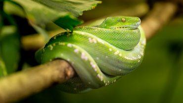 O que significa sonhar com cobra verde