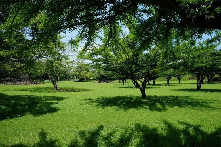 Sonhar com grama verde