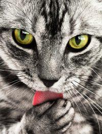 urina de gato