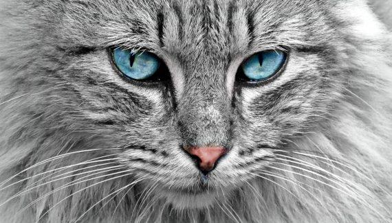 Sonhar com gato mordendo