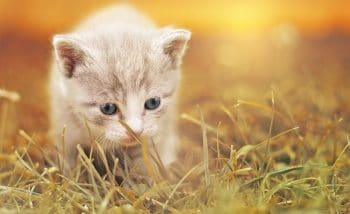 Sonhar com filhote de gato morto