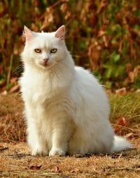 Sonhar com gato branco morto