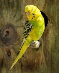 passarinho de cor verde