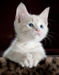 bosta era de gato ou gata