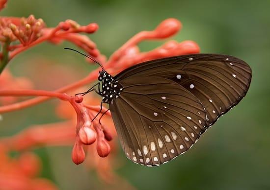 O que significa sonhar com borboleta