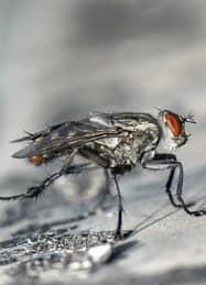 enxame de insetos