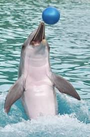 golfinhos nadando no rio