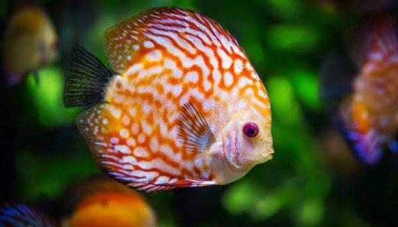 Sonhar com peixe no Jogo do Bicho
