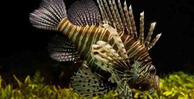 Sonhar com espinha de peixe