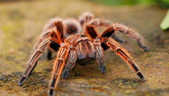 Sonhar com picada de aranha
