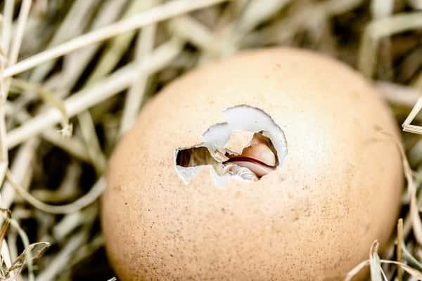 Sonhar com ovo jogo do bicho