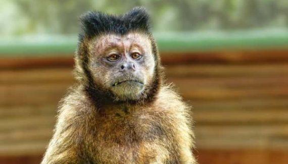 Sonhar com macaco no Jogo do Bicho