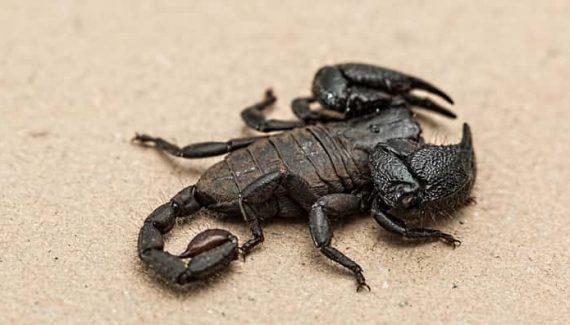 Sonhar com escorpião no Jogo do Bicho