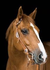 Cavalos marrom