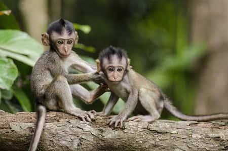 Filhotes de macaco